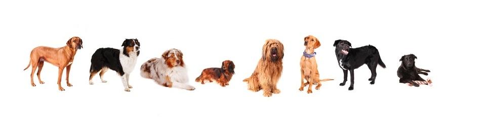 Hundeschule in Barleben